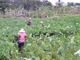 Supporting Rural Communities